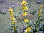 medium_fleurs_jaunes.JPG