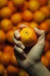 medium_oranges3.jpg